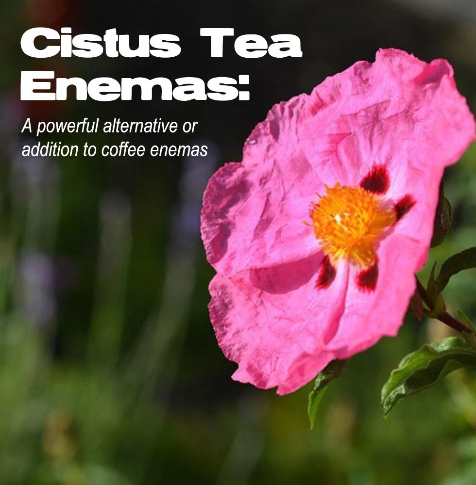 Cistus-feature